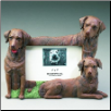 Chocolate Labrador Photo Frame (SKU: DBBreed-ChocolateLabFrame)