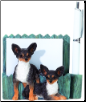 Chihuahua Pet Note Holder (SKU: DBBreed-ChihuahuaPetnotes)