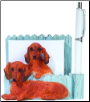 Red Dachshund Pet Note Holder (SKU: DBBreed-RedDachshundPetnotes)