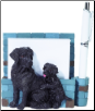 Black Labrador Pet Note Holder (SKU: DBBreed-BlackLabradorNotepads)
