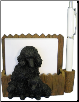 Black Poodle Pet Note Holder (SKU: DBBreed-BlackPoodlePetnotes)