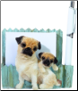 Fawn Pug Pet Note Holder