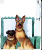 German Shepherd Pet Note Holder (SKU: DBBreed-GermanShepherdPetnotes)