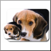 Beagle Mouse Pad & Coasters Set by Little Gifts