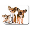 Chihuahua Mouse Pad & Coasters Set by Little Gifts