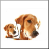 Golden Retriever Mouse Pad & Coasters Set by Little Gifts