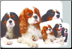 King Charles Spaniel Mouse Pad & Coasters Set by Little Gifts
