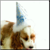 Blue Happy Birthday Party Hat for Dogs