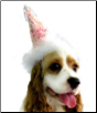 Pink Happy Birthday Party Hat for Dogs
