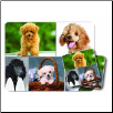 Poodle Mouse Pad & Coasters Set by Little Gifts