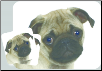 Pug Mouse Pad & Coasters Set by Little Gifts