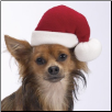 Pet Friendly Santa Hat (SKU: HS-SantaHat)
