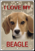 I Love My Beagle Sign
