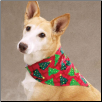 Aria Holiday Bandana Gift Set (SKU: AB-DT225)