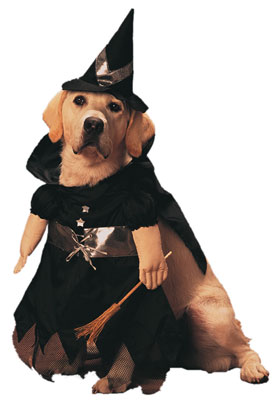 HS_Bewitch_Dog_Costume.jpg