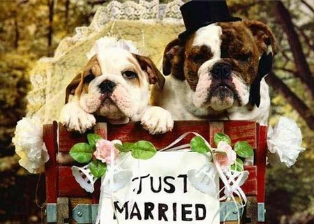 35 Dog Couples Getting Married