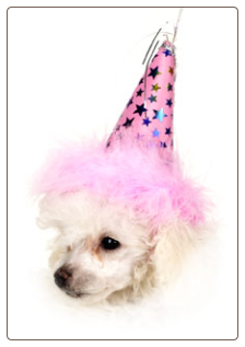 Birthday Party Hats in Pink or Blue!